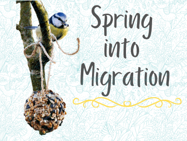 Spring into Migration